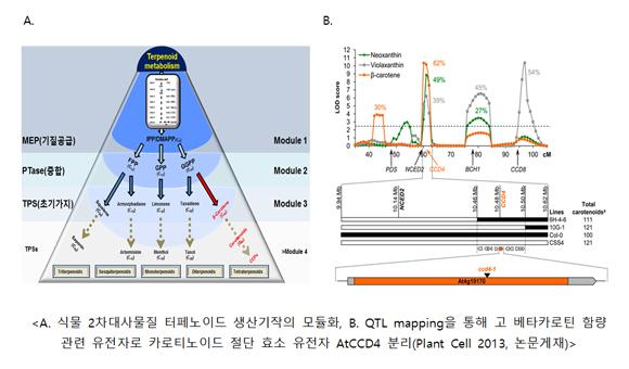 식물 2차대사물질 터페노이드 생산기작의 모듈화 and QTL mapping을 통해 고 베타카로틴 함량 관련 유전자로 카로티노이드 절단 효소 유전자 AtCCD4 분리