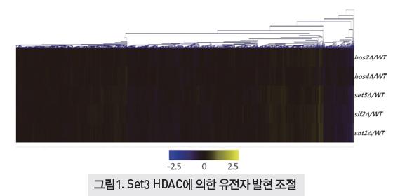 Set3 HDAC에 의한 유전자 발현 조절