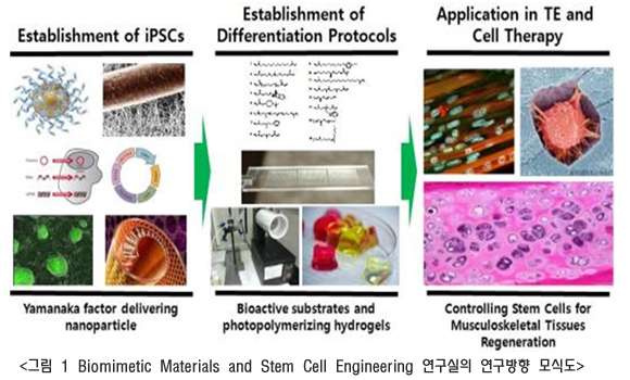 Biomimetic Materials and Stem Cell Engineering 연구실의 연구방향 모식도