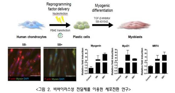 비바이러스성 전달체(non-viral vector)를 이용한 세포 전환 연구