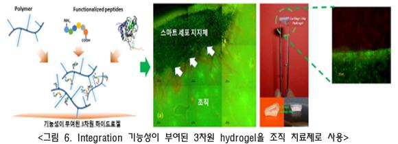 접착형(adhesive) 하이드로겔 개발 연구