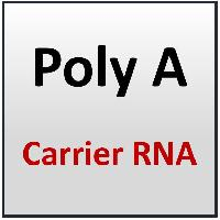 Poly A Carrier RNA