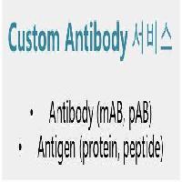 Custom Antibody ���� Service