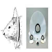 Elizabethan Collars (Mouse & Rat collars)