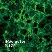 iPSelector: Anti-Human LNFP I, Mouse Monoclonal