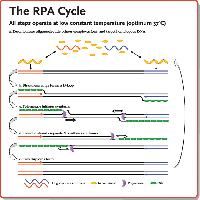 Recombinase Polymerase Amplification (RPA)