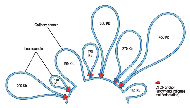 2m ���� DNA�� �����ٿ� ��� ���� ��� ������?