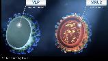 3월 20일자로 세계보건기구 WHO에서 COVID-19 백신 후보들을 공개하였습니다. 현재 임상에 들어간 두 개의 후보