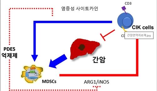 간암 사멸 치료제, 면역억제세포 증가 규명