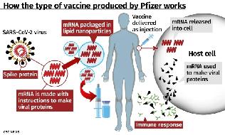 과학자들은 '백신이 COVID-19를 예방할 수 있다'는 최초의 납득할 만한 증거를 반기고 있다. 그러나 '효능의 정도', '투여 대상자', '효능의 지속 기간'에 대한 의문은 여전히 남아 있다.