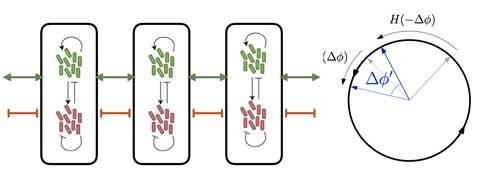 수학 모델 통해 세포 상호작용 원리 규명