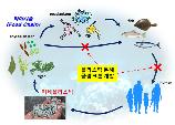 식물성 플랑크톤으로 페트병 분해 해법 찾았다...한국생명공학연구...