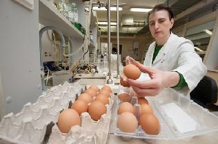 닭에게 코로나바이러스의 스파이크 단백질을 접종하면, 그에 대한 항체가 생겨나 달걀로 나온다. 그 항체를 수확해 점비액