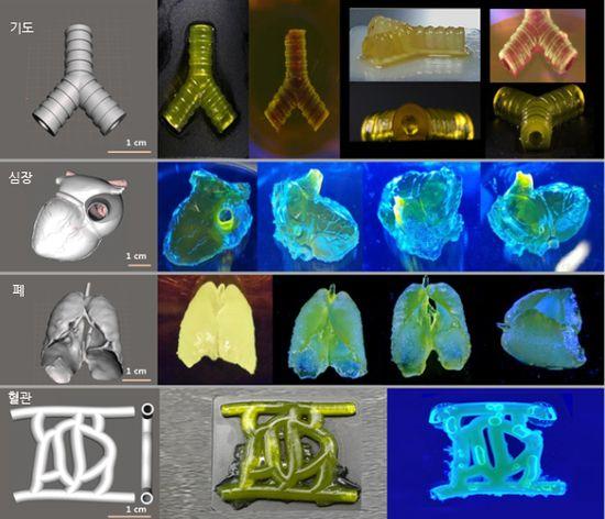 심장·뇌 등 복잡한 장기도 제작 가능한 3D프린팅 바이오잉크 개발