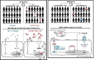 [바이오토픽] 인터페론: 중증 COVID-19의 14%에서 발견된 ...