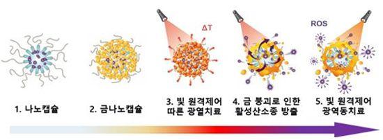 암 세포 표적 치료...'스마트 금나노 캡슐' 개발