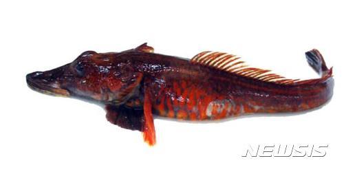 남극 '용물고기' 게놈 분석 완성
