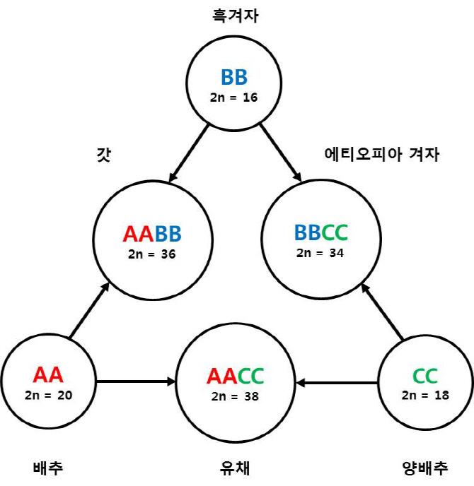 우장춘 박사 '우의삼각형' 유전체 정보로 증명