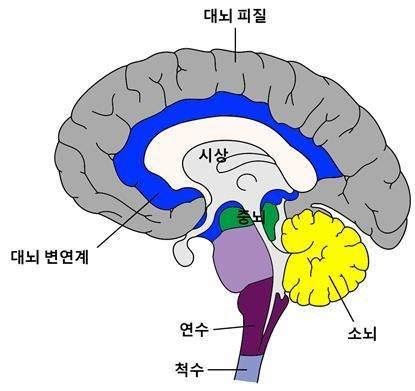 매, 파킨슨병 등 퇴행성 뇌질환에 걸리면 뇌의 신경세포가 죽지만, 과학자들은 줄기세포로 신경세포를 대량으로 만들어 손상된 부위를 복...