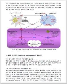 알코올성 간질환 치료를 위한 간성상세포의 기능 연구에 대한 동향