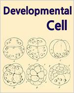 근육 줄기세포 지지 그룹: 근육 재생 과정 중 조직적인 세포 반응