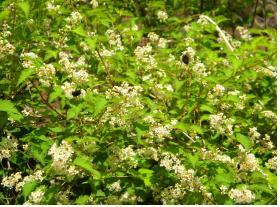 흰 꽃에 자주 모여든다