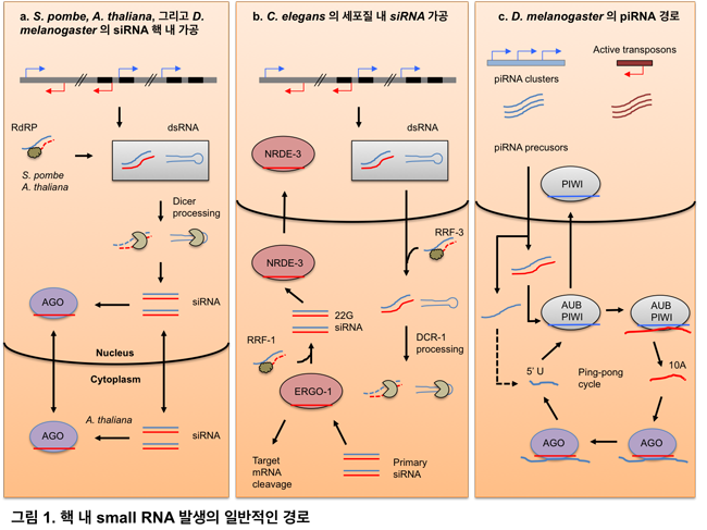 download Immunology