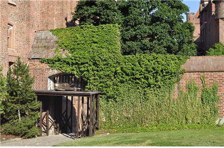 Ivy-covered entrance to Malbork Castle