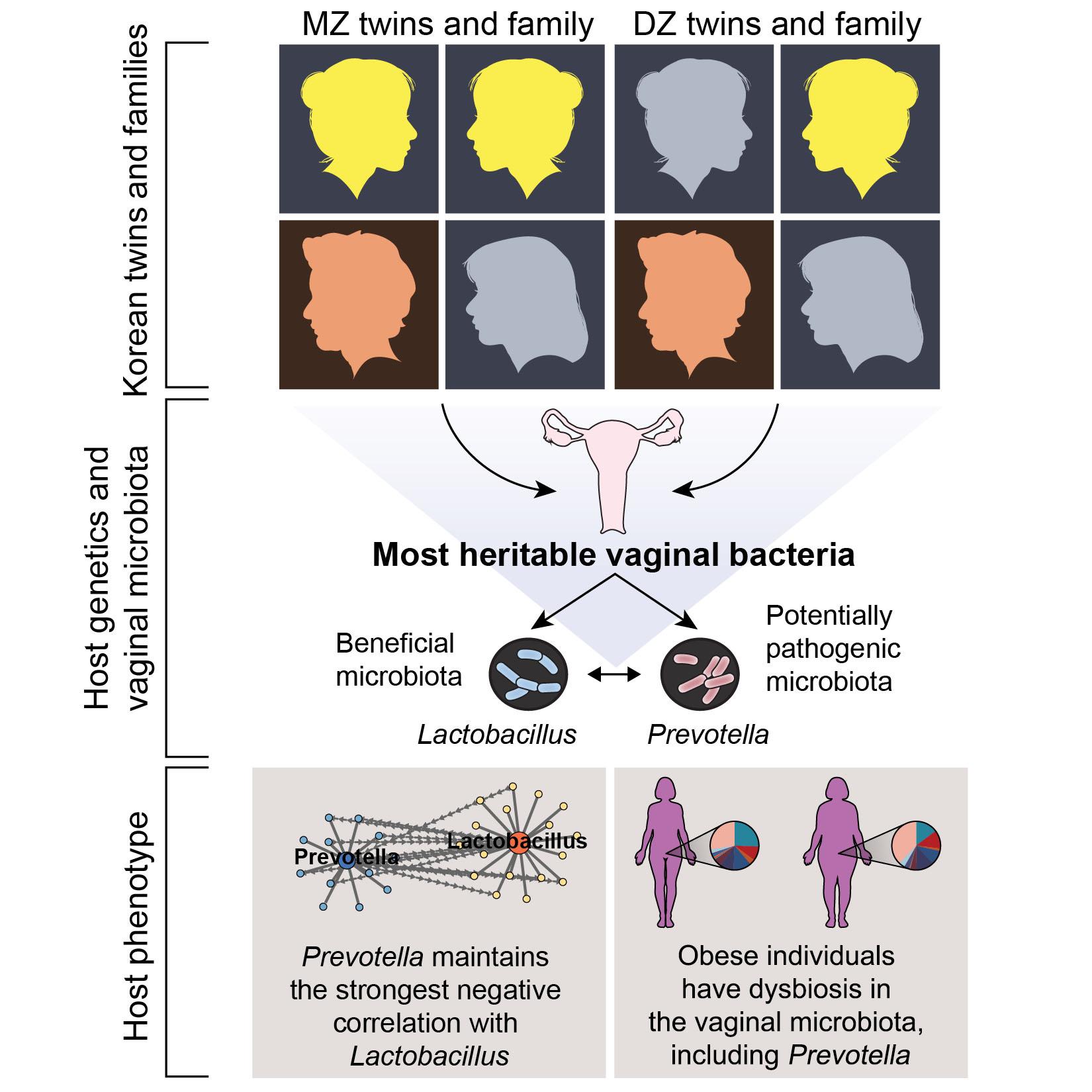 유전되는 질 내 박테리아, 비만까지 영향 준다