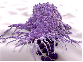 A rendering of macrophages engulfing and digesting cellular debris and pathogens