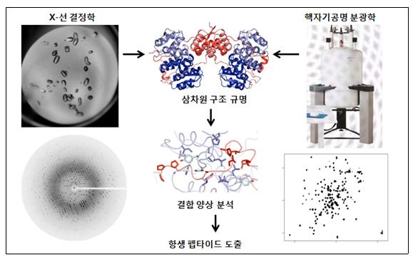 X-선 결정학과 핵자기공명 분광학을 토대로 한 신약 개발