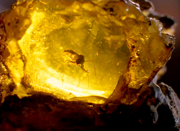 송진이 변형되어 만들어지는 보석, 호박 안에 갇힌 모기. 영화 쥬라기공원은 공룡의 피를 빤 모기의 혈액에서 공룡의 유전자를 복원, 다시 공룡을 만드는 설정으로 되어 있다
