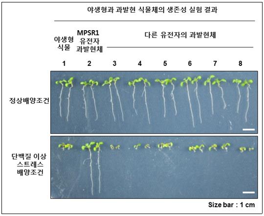 이상기후에 대응한 단백질 품질제어 유전자 규명