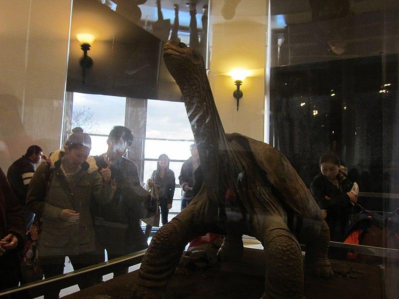 미국의 한 박물관에 전시된 외로운 '조지'. 박제화 된 '조지'는 사람들의 흥밋거리일 뿐일까