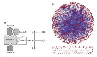 단백질 간의 상호작용과 이를 모형화하여 나타낸 그래프