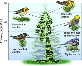 같은 나무에 살지만, niche는 서로 다른 새들