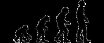 직립보행을 통해 niche의 차별화에 성공한 인류의 진화