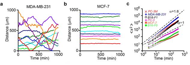 전이/비전이 암세포 이동 그래프와 이동성 분석