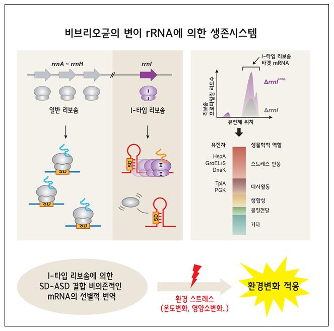 변형된 RNA를 이용해 세균이 살아남다