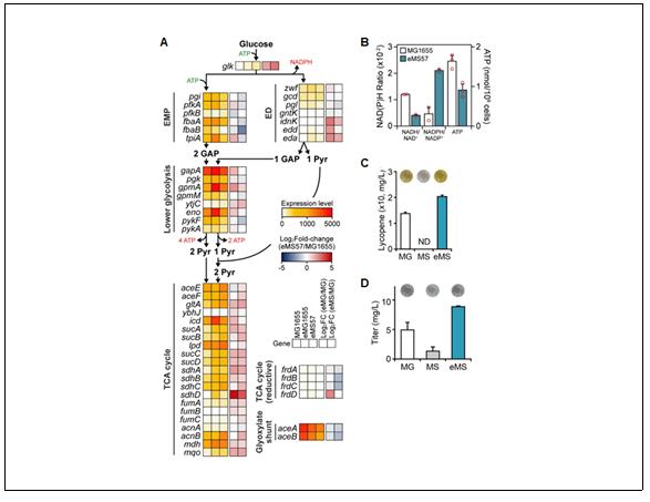 유전자가 최소화된 미생물의 독특한 생장원리 규명