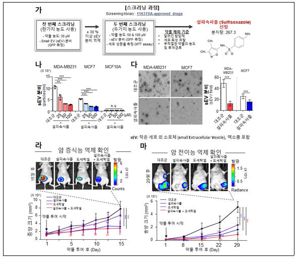 암세포 닮은 엑소좀 억제하는 암치료법 개발