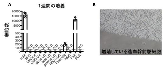 혈청알부민을 사용하지 않은 PVA 배양액은 생쥐 조혈모세포의 증식을 효율적으로 유도한다