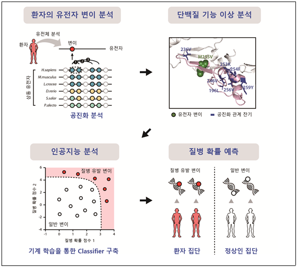 유전자 변이의 질병유발 예측 더 정확하게