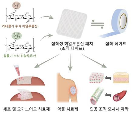 파스처럼 붙여 세포·약물 스며들게 하는 하이드로젤 테이프 개발