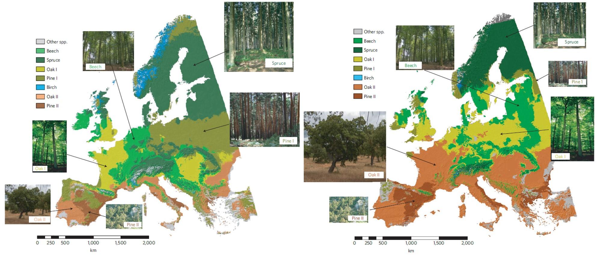 기후변화 A1B 시나리오 상에서 유럽 산림의 변화를 예측한 연구