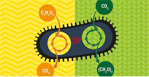 이산화탄소 먹는 대장균 탄생