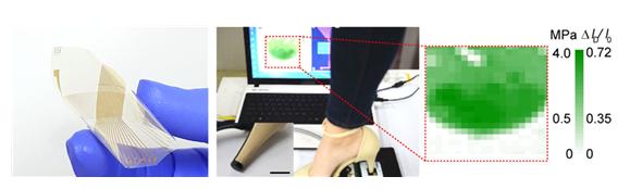 미세한 세포 움직임까지 포착하는 3D 촉각 인식장치 개발