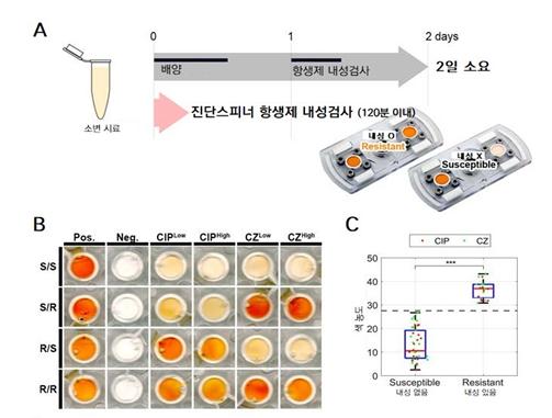 진단용 스피너를 이용한 항생제 내성 실험