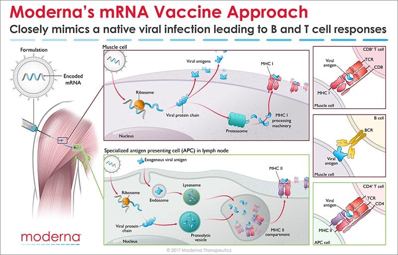 코로나바이러스 백신의 1차 결과물 총평(總評): 장래성은 아직 불투명