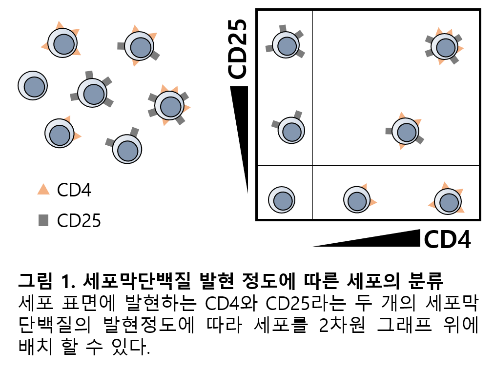 Flow Cytometry_입문